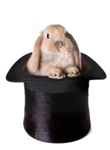 Bunny surprise